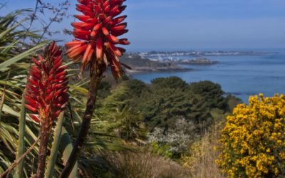 Küstenweg auf Guernsey