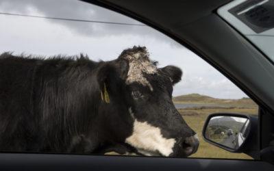 Autofahren in Irland