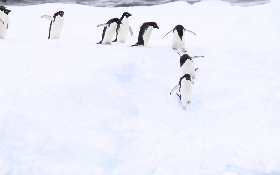 """Expeditions-Seereise """"Antarktis – Im Land der Pinguine"""""""