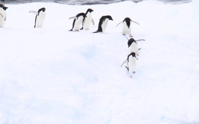 "Expeditions-Seereise ""Antarktis – Im Land der Pinguine"""
