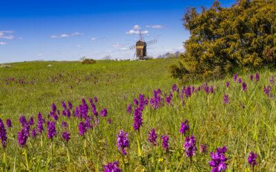 Schätze der Welt: Öland – Blumenpracht auf kargem Felsen