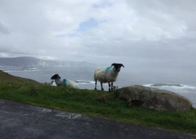 Typischer Anblick in Irland