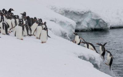 Die Wanderung der Pinguine