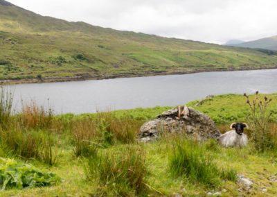 Traumhafte Flusslandschaft in Irland
