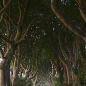 Autorundreisen Irland Dark Hedges