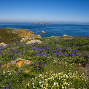 Autorundreisen Irland Saltee Islands