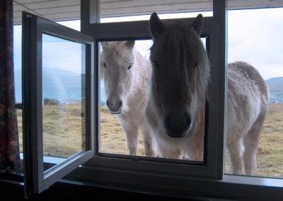 Pferde am Fenster