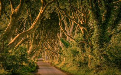 The Dark Hedges, Nordirland