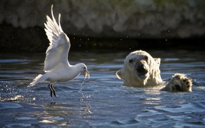 """Expeditions-Seereise """"Spitzbergen und Norwegen – Eisbären, Inseln und Fjorde"""""""