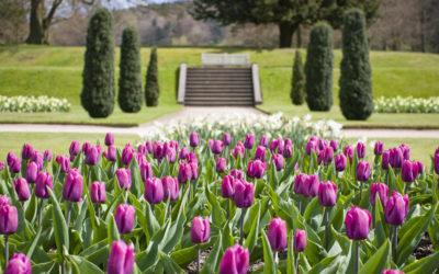 Frühling in England