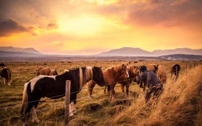 Island – Im Bann der Pferde