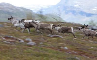 Lappland – Rushhour im hohen Norden