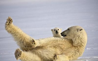 Grönland und Spitzbergen Reisen 2013