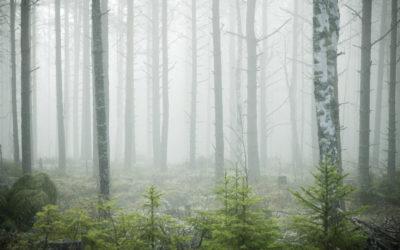 Herbstliche Wälder, Finnland