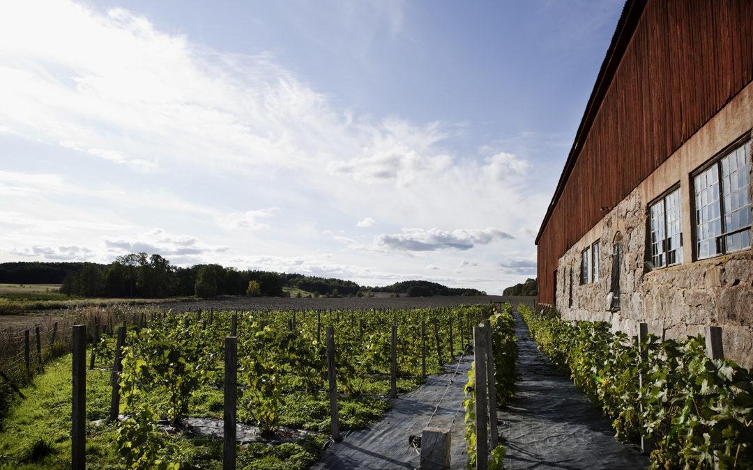 Blaxsta Vingård, Schweden