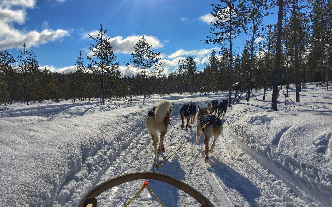 Exclusiv Reise nach Finnland: Motorschlitten- und Husky-Safari