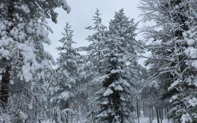 Exclusiv Reise nach Finnland: Ankunft in Rovaniemi