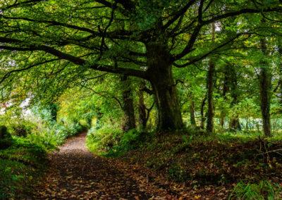Waldweg im County Tyrone