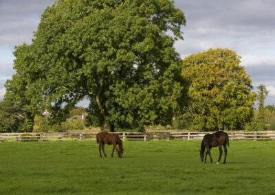 Irisches Nationalgestüt im County Kildare