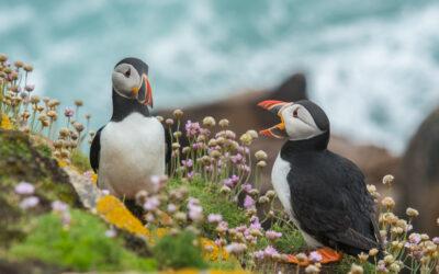 Irland: Flora und Fauna