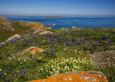 Saltee Islands im County Wexford