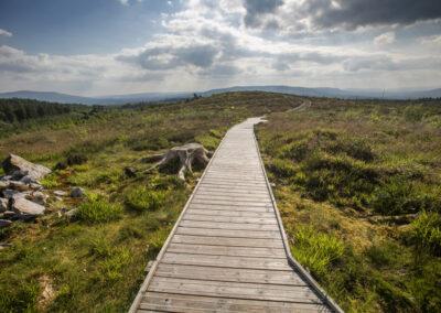 Weg durch den Burren Park im County Cavan