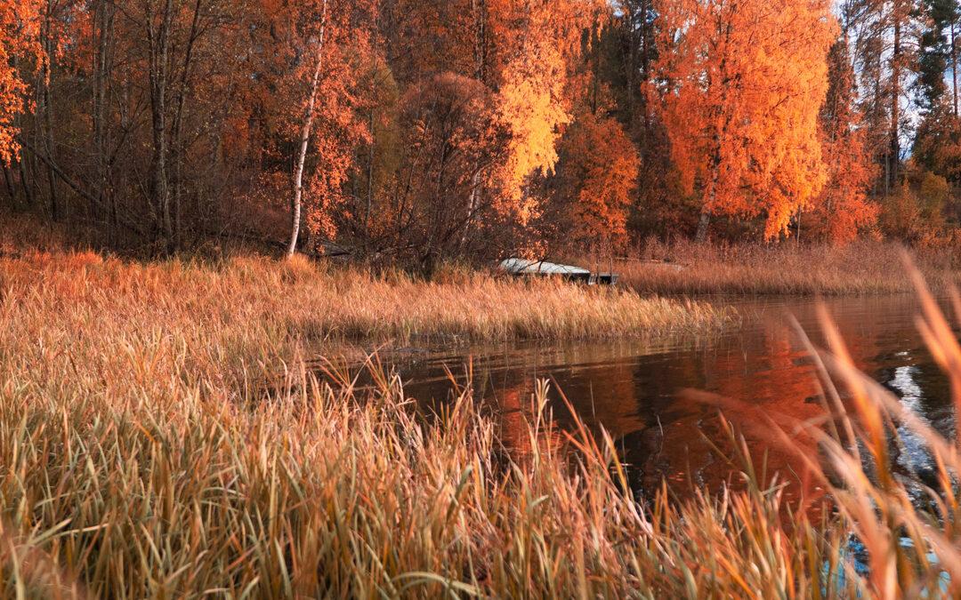 Ruska – Herbst in Finnland